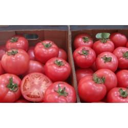Pomidor Rapanui F1 250n.