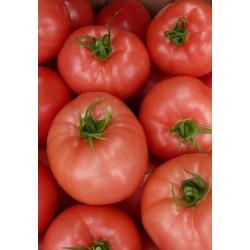Pomidor HTP-11 1 000 n.