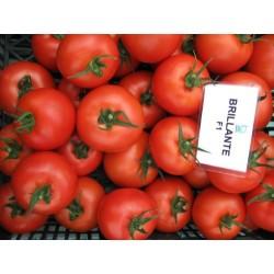 Pomidor Brillante F1 1 000 n.