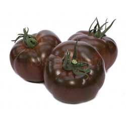 Pomidor czekoladowy Big...