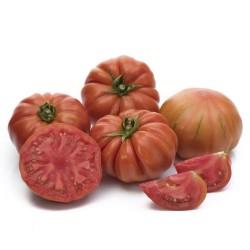 Pomidor Bocamegra F1 250n.
