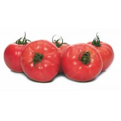 Pomidor Fuchsia F1...