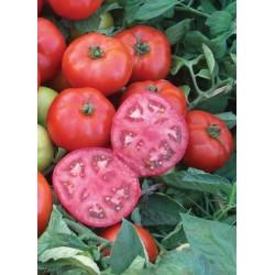 Pomidor Maracana 1000 n.