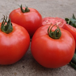 Pomidor Zadurella F1 250 n.