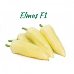 Papryka Elmas F1 500 n