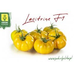 Pomidor Lacitrine F1 50 n