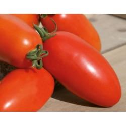 Pomidor Dartagnan F1 1 000 n.