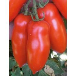 Pomidor Giulietta F1 250 n.
