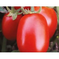Pomidor C317 F1 5000 n.