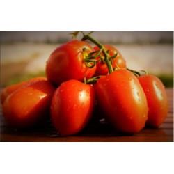 Pomidor Dyno F1 5000 n.