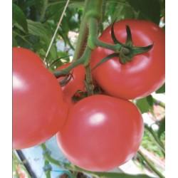 Pomidor Pink Beauty F1...