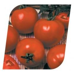 Pomidor Duty 1 000 n.
